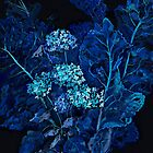 Hydrangea and Horseradish Leaves, Black & Blue by clipsocallipso