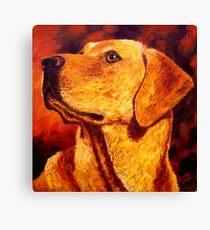 Labrador Dignity Canvas Print
