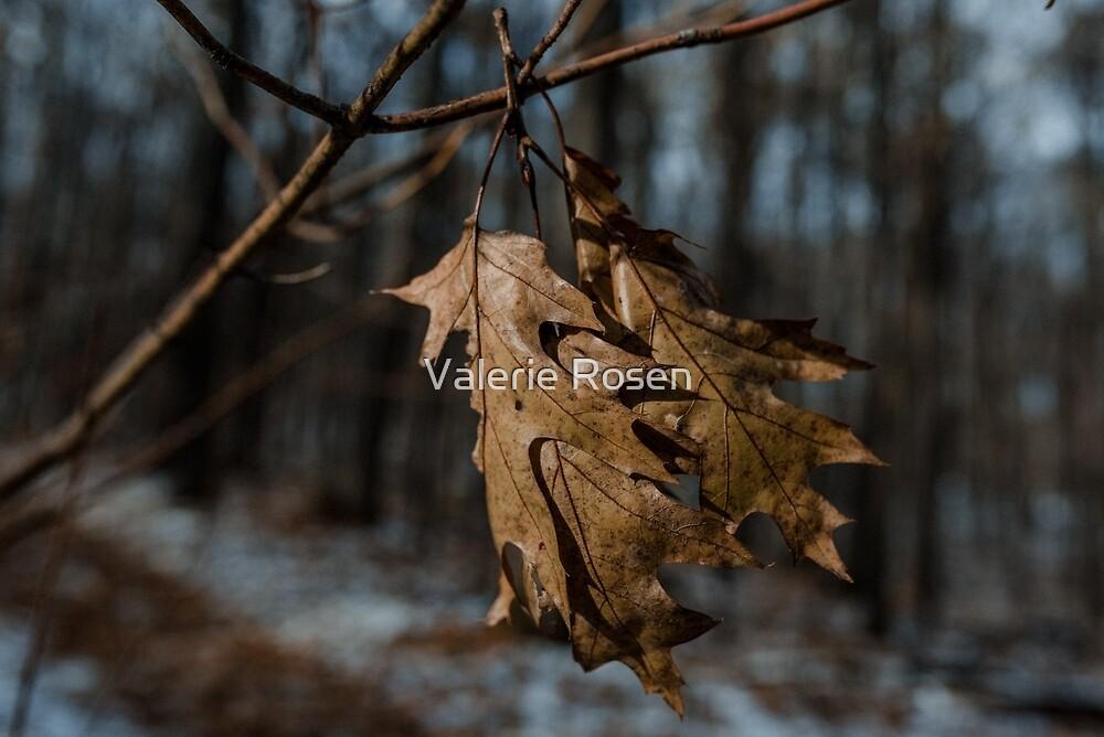 Dangling by Valerie Rosen
