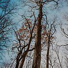 Against a Blue Sky by Valerie Rosen