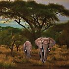 African Elephants by Walter Colvin