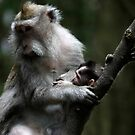 Indonesia 12 - The Monkey (macaques)  by Normf