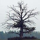 Magical Oak by Antanas