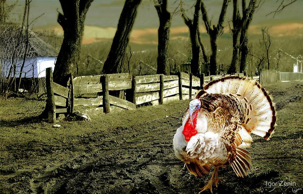 Country Turkey  by Igor Zenin