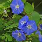 Beautiful Blue by Robert Abraham