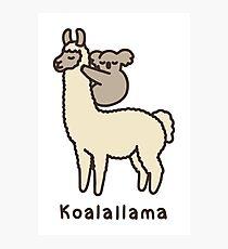 Koalallama Photographic Print