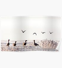 Geese fairy tale Poster