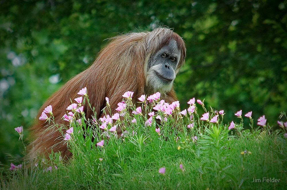 Orangutan In Flowers by Jim Felder