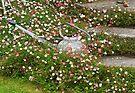 Floral Submerging by Ryan Davison Crisp