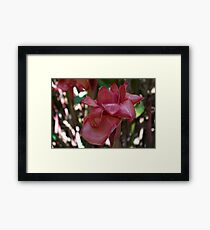 Waxy Impressions (Red Torch Ginger) Framed Print