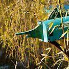 Mail fishing... by Michel Raj