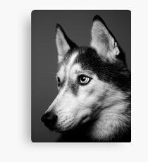 Siberian Husky Canvas Print