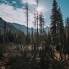 Sunny Trail - Landscape and Nature Photography by ewkaphoto