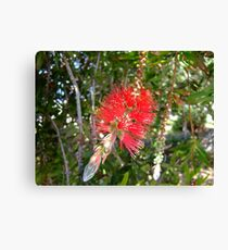 Too pretty to wash bottles Canvas Print
