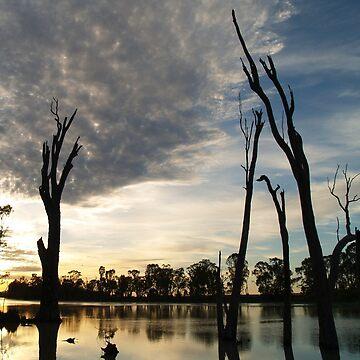 River Murray at dawn - Berri South Australia by jembot