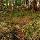 Badger Woods by mlphoto