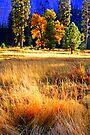 """""""Valley Meadow"""" by Lynn Bawden"""