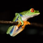 Tree Frog by Richard Shakenovsky