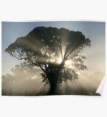 ~ Sunburst ~ Poster