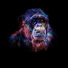 Chimp by talipmemis