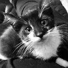 Baby Nelson von TeAnne