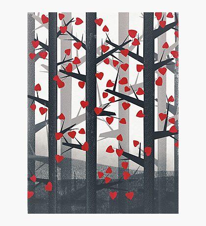 Heart Wood Photographic Print