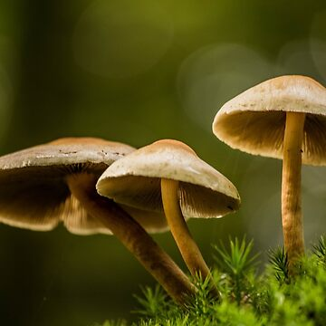 White Mushrooms in the Forest by studiopico