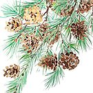 green pine tree watercolor  by ColorandColor