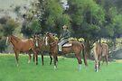 Steve & His Stockhorses by louisegreen