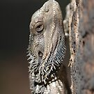 Eastern Bearded Dragon by Andrew Trevor-Jones