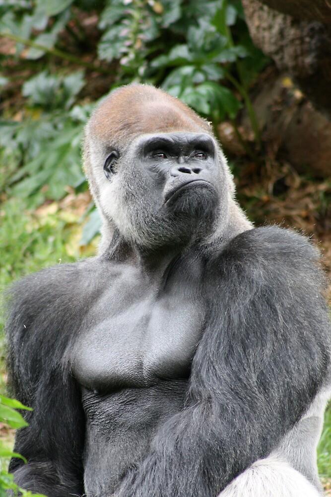 Rigo the Silverback Western Lowland Gorilla - Melbourne Zoo by GigaczArt