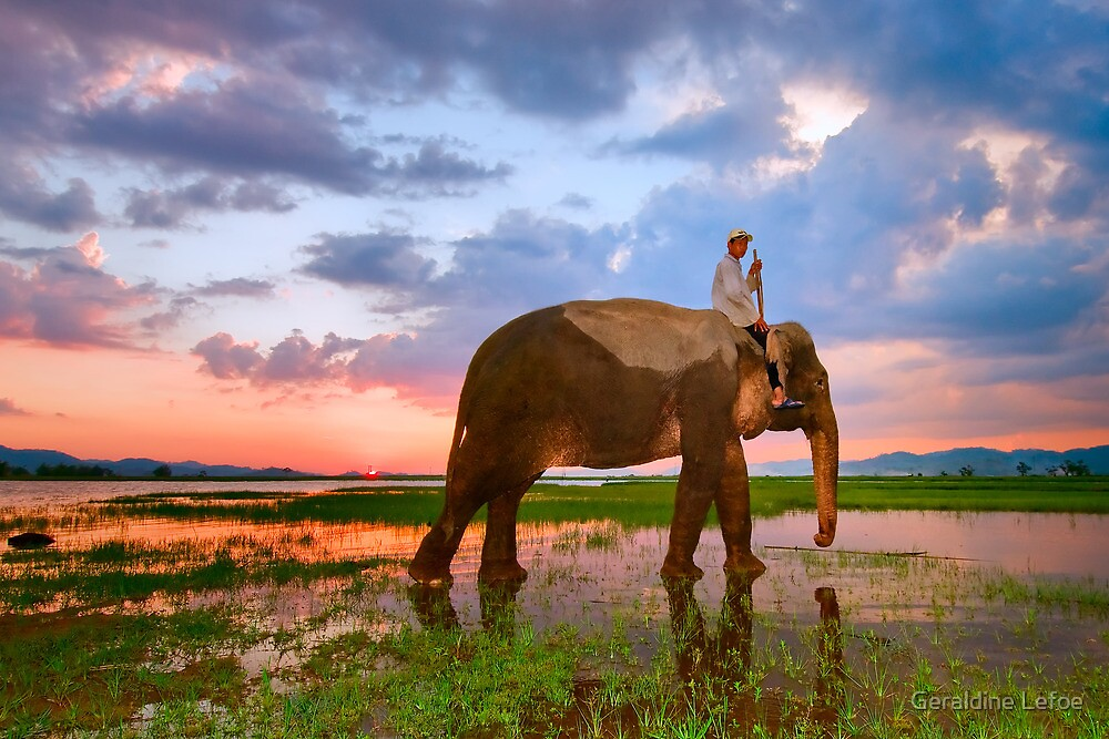 Elephant sunset, Vietnam by Geraldine Lefoe