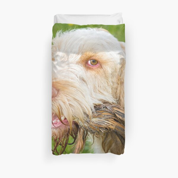 Orange and White Italian Spinone Holding Pheasant Feathers Duvet Cover