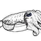 Friendly Cuttlefish by sneercampaign