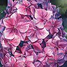 Spring hydrangea by Emma   Reznikova