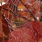 Nature's Jewelry by Betsy  Seeton