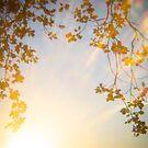 Holga Nature #1 by David Hawkins-Weeks