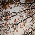 Holga Nature #3 by David Hawkins-Weeks