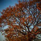 Holga Nature #4 by David Hawkins-Weeks