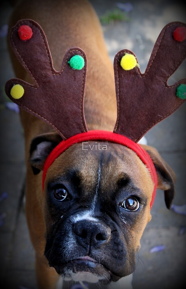 Merry Christmas - Boxer Dog Series by Evita