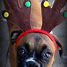 Merry Christmas - Boxer Dog Series by Evita