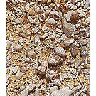 Shells at Anniversary Bay by Richard Klekociuk