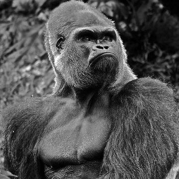 Rigo the Silverback Western Lowland Gorilla - Melbourne Zoo (Black and White) by GigaczArt