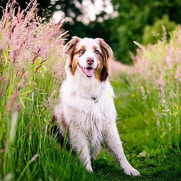 Doggy by lvsworks