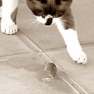 Tom and Jerry ? Nope.....not any more by Berns