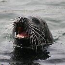 Svolværs sjøløven - The sea lion of Svolvær. by ellismorleyphto