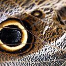 Eye see you by onichek