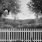 White Picket Fence by Ellen Cotton