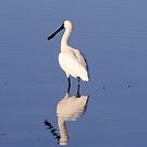 Spoonbill Reflection by Gabrielle  Lees