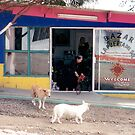 Mexico dogs by andytechie